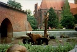 1994 Bärenkinder im Berliner Bärenzwinger
