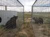 Bärentransport von Buenos Aires nach Colorado © Eco Park Buenos Aires