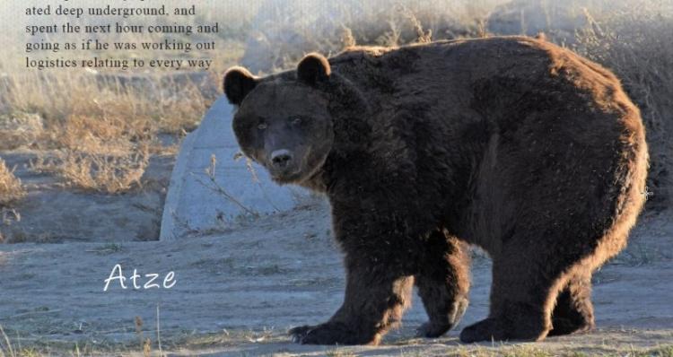 Atze and Bärolina Story Winter 2018 © Wild Animal Sanctuary