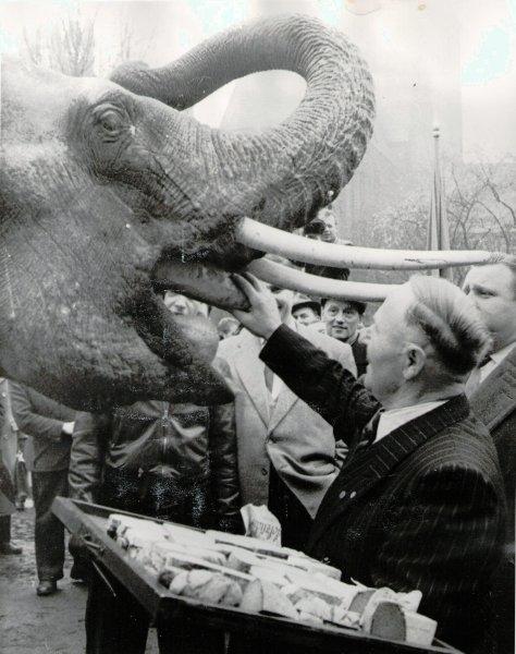 Bärenvater Porath füttert einen Elefanten mit Brot im Berliner Tierpark Foto © Privat