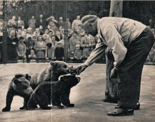 Bilder aus dem Bärenkindergarten im Berliner Tierpark im April Foto © Budich