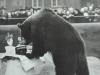Ein besonderer Bärengeburtstag Foto © Privat