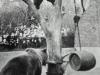 Nante und Jette bei der Futtersuche auf dem Baum Foto © Privat