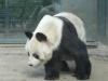 Bao Bao gestorben (22.08.2012)
