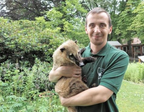 Tierpfleger Swen Schmidt hält hier das Wappentier des Tierparks – den Nasenbär – fest in seinem Arm Foto © Regina Berger