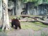 061024 ein Bär im Zoo von Buenos Aires  © Club Berlin Buenos Aires