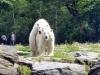 Eisbären Wolodja und Tonja © Berliner Bärenfreunde e.V.