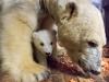 Eisbär Fritz und Tonja © Tierpark Berlin 2017