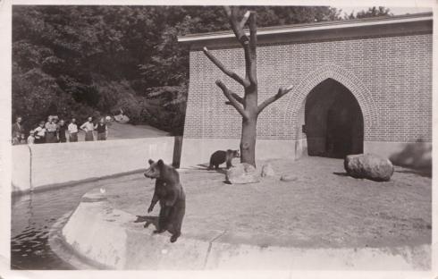 1939 Berlin. Bärenzwinger im Köllnischen Park, AK - Sammlung Junge