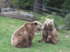 Braunbären im Berliner Zoo 2009 - Foto © Gisela Stenwald
