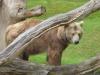 Siddy aus dem Berliner Zoo © Gisela Stenwald