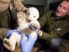 Erste Untersuchung Eisbärjungtier 2017 Foto © Pressestelle Berliner Tierpark