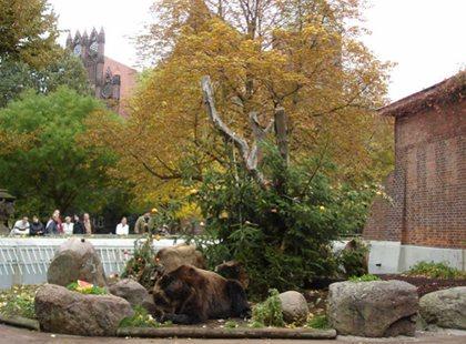 Die fruchtige Lage reicht für alle drei Bären